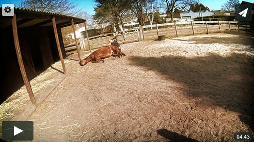connectie fysiek contact met paarden